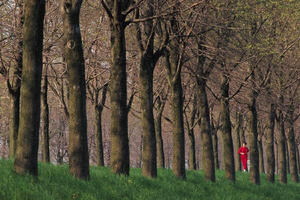A man was walking through a forest