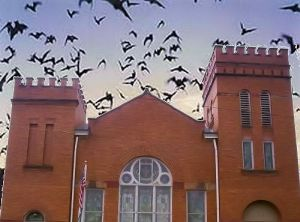 Bats in church
