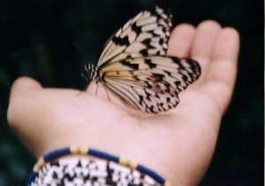 Butterfly answering prayer