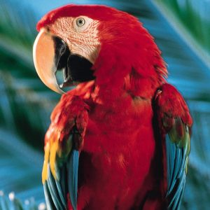The Parrot that recites the entire Bible