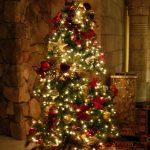 Christmas Tree Pics 0101