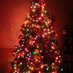 Christmas Tree Pics 0102