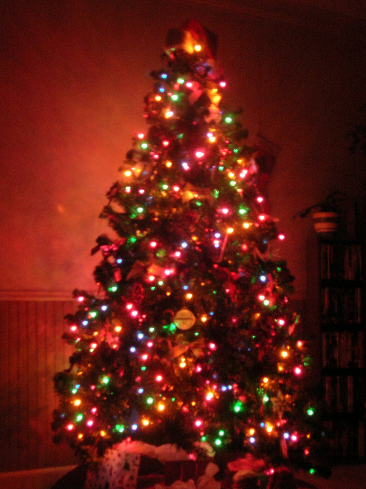christmas-tree-pics-0102