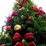 Christmas Tree Pics 0103