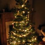 Christmas Tree Pics 0104