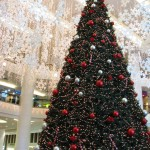 Christmas Tree Pics 0106