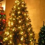 Christmas Tree Pics 0109