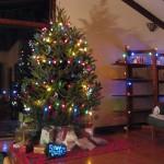 Christmas Tree Pics 0110