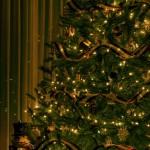 Christmas Tree Pics 0115