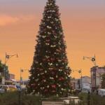 Christmas Tree Pics 0118