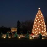Christmas Tree Pics 0122