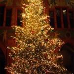 Christmas Tree Pics 0203