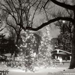 Christmas Tree Pics 0204