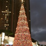 Christmas Tree Pics 0209