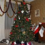 Christmas Tree Pics 0212