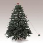 Christmas Tree Pics 0215