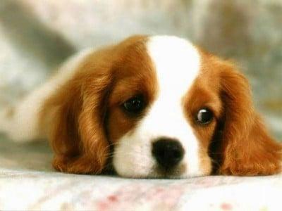 A Dogs Plea