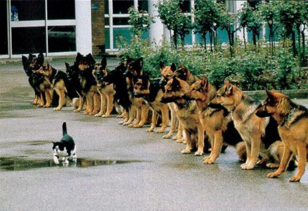courage of a cat