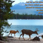 Scenic Wallpapers with Bible Verses 49