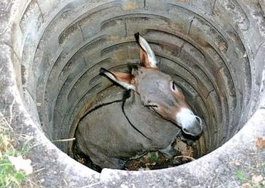 old mule in the well