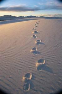 desert-path
