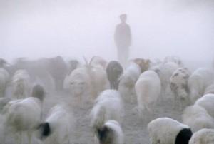 lamb-discipline