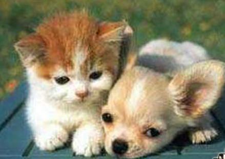 cute puppies and kittens wallpaper