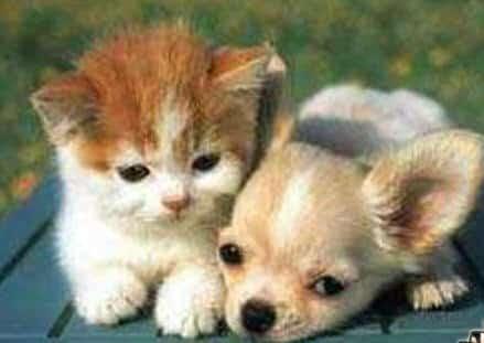 kitten_puppy