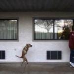 the-dog-named-faith-01