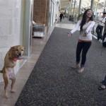 the-dog-named-faith-03
