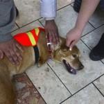 the-dog-named-faith-06