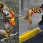 the-dog-named-faith-12