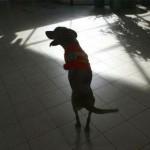 the-dog-named-faith-15