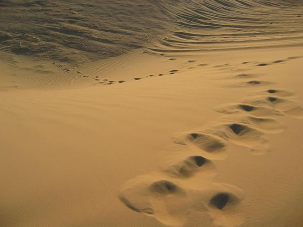 NEW VERSION OF FOOTPRINTS