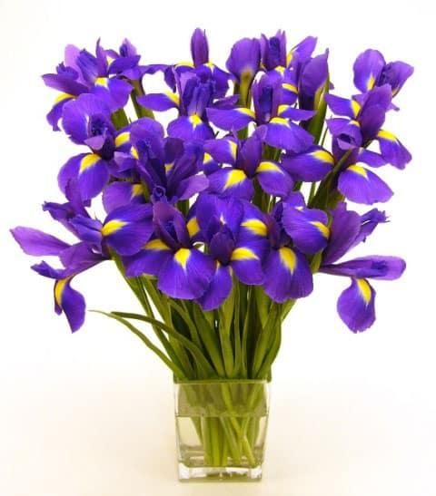 flowers blue color