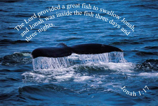 Jonah inside fish