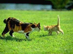2010 cat pic 10