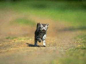 2010 cat pic 11