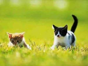 2010 cat pic 12