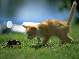 2010 cat pic 14