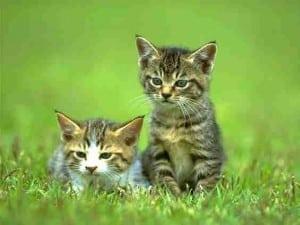 2010 cat pic 15