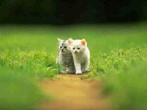 2010 cat pic 16