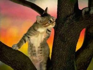2010 cat pic 17