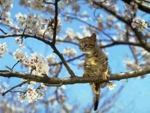 2010 cat pic 18