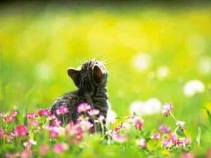 2010 cat pic 19