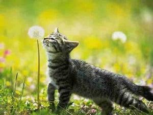 2010 cat pic 20