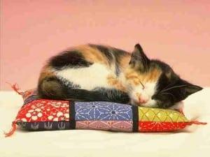 2010 cat pic 21