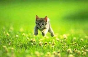 2010 cat pic 01