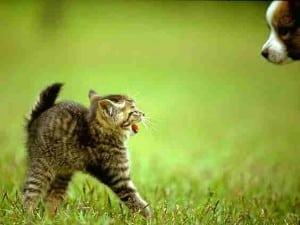 2010 cat pic 03