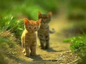 2010 cat pic 06